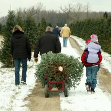Photo: Family lugging their freshly cut tree, © Lori Sparkia/ Shutterstock.com