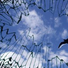 A dove flies above a cage of glass. Image courtesy Yu Lan/shutterstock.com.